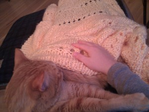 Orange Cat sits in my lap and snuggles me.